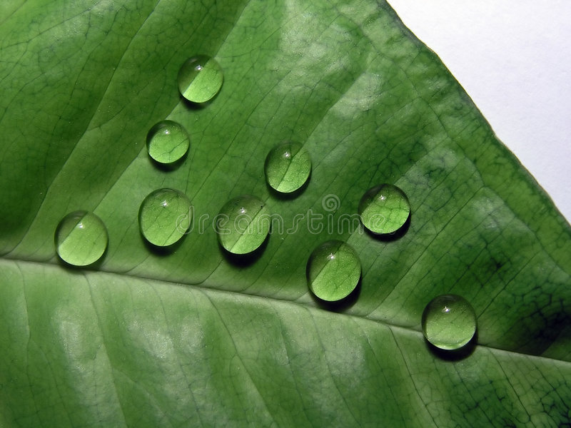 Download Drops stock photo. Image of plant, separated, leaves, drops - 149010