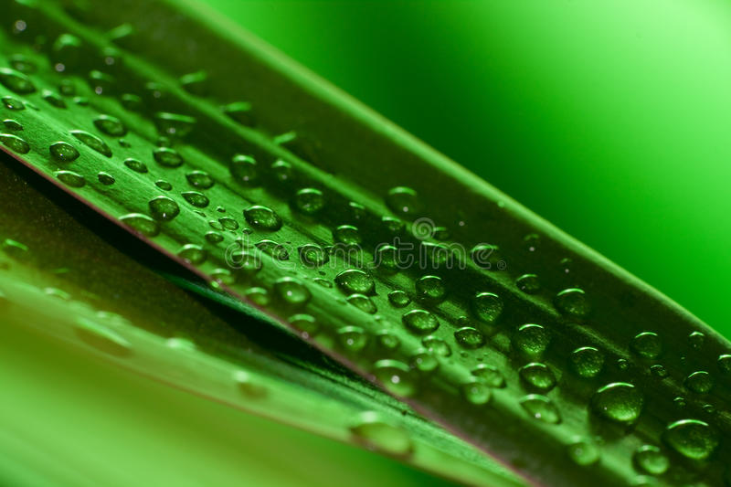 Drops royalty free stock image