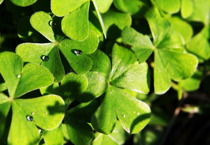 Download Drops stock image. Image of focus, desert, nature, leaf - 21961639