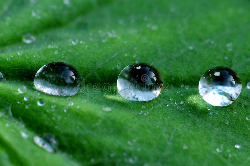 Download Drops stock image. Image of life, green, nature, grass - 25209833
