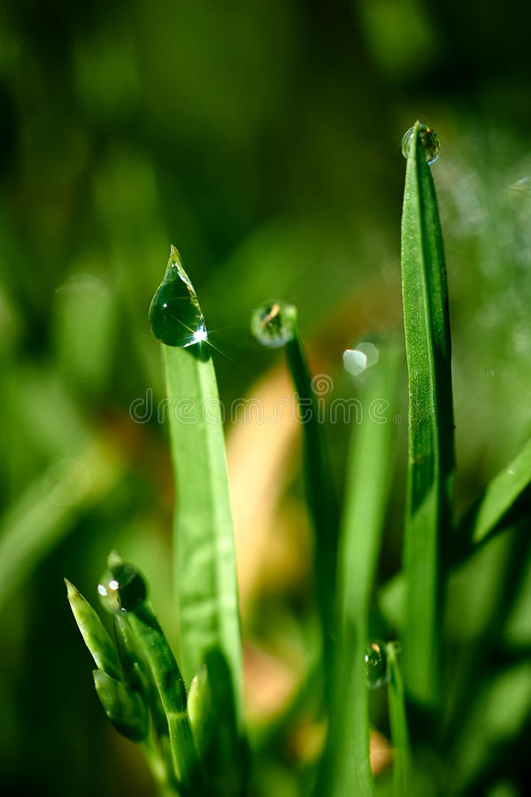 Download Drops Of Dew On The Green Grass Stock Photo - Image: 41377645
