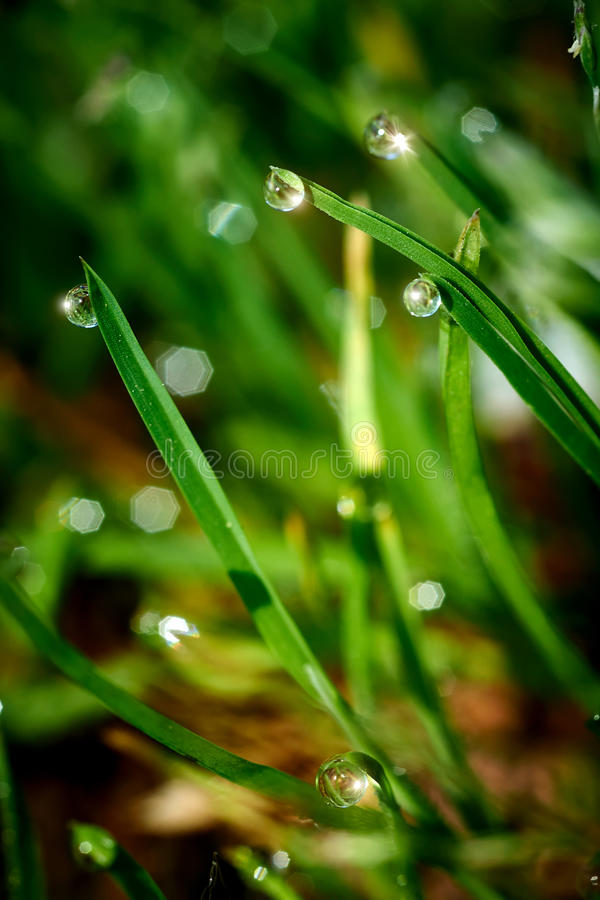 Download Drops Of Dew On The Green Grass Stock Image - Image: 41377683