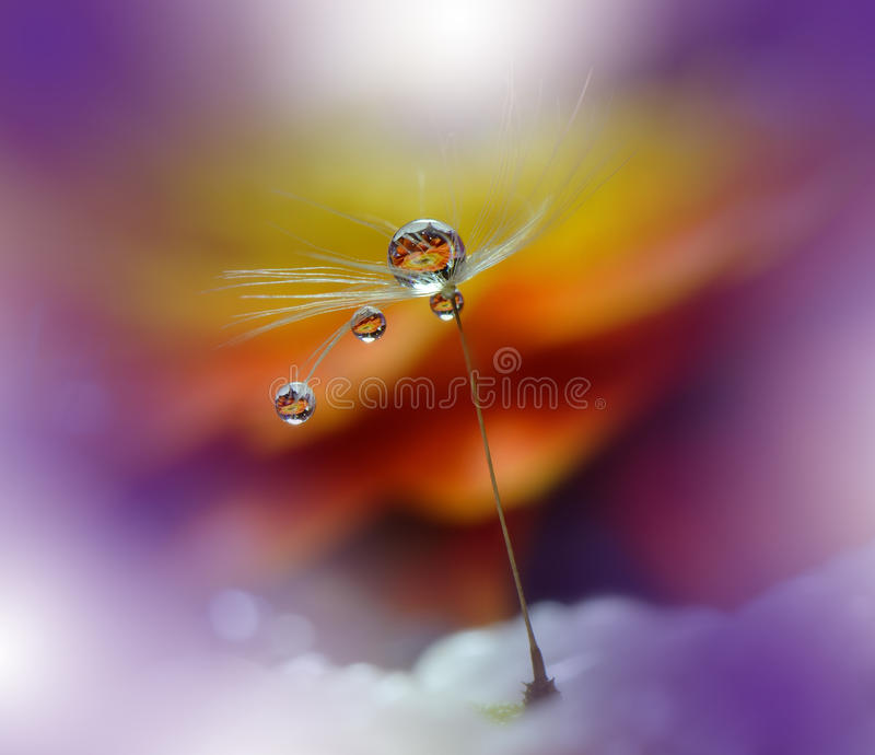 Drops on floral background closeup.Tranquil abstract art photography.Print for Wallpaper.Floral fantasy design.Nature,macro,orange. Abstract macro photo with royalty free stock photo