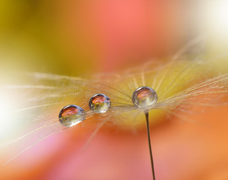 Drops on floral background closeup.Tranquil abstract closeup art photography.Print for Wallpaper...Floral fantasy design... Abstract macro photo with dandelion stock photos
