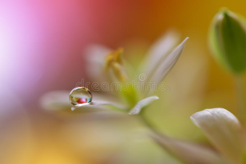 Drops on floral background closeup. Tranquil abstract closeup art photography. Print for Wallpaper. Floral fantasy design. Abstract macro photo with flower and stock images