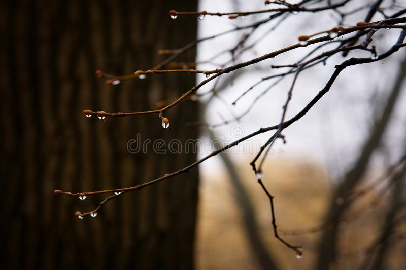 Drops on glassdrops of water on autumn branches stock images
