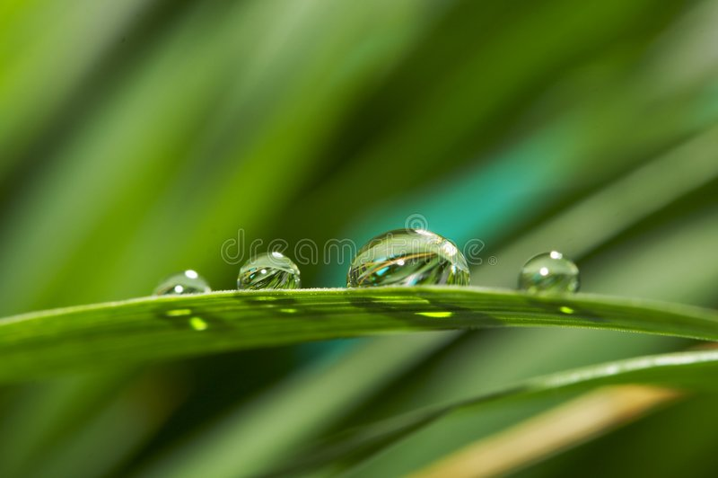 Drops With Green Grass Stock Images