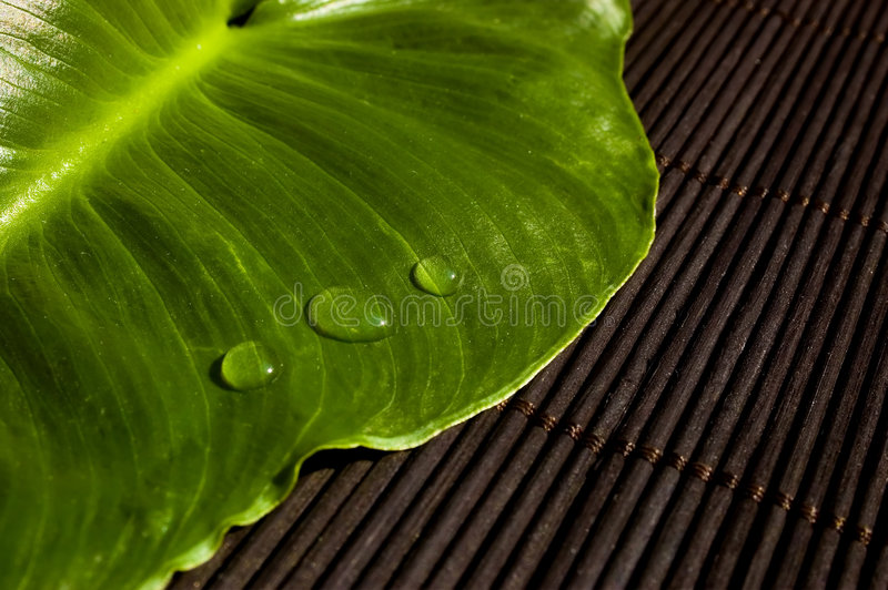 Drops on a leaf royalty free stock images