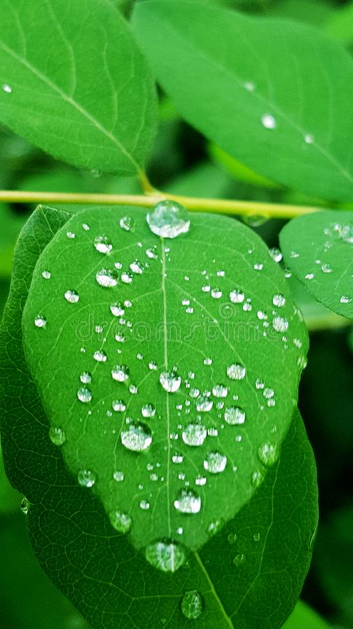 Drops on the leaf stock photography