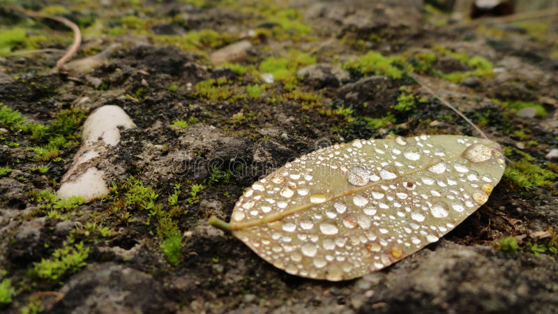 Drops on leaf stock image