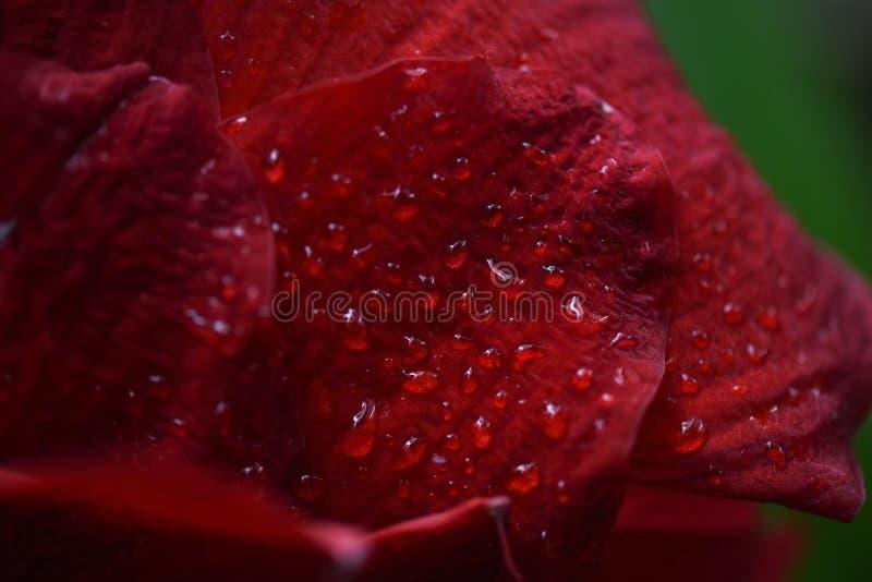 drops leaves macro water 图库摄影