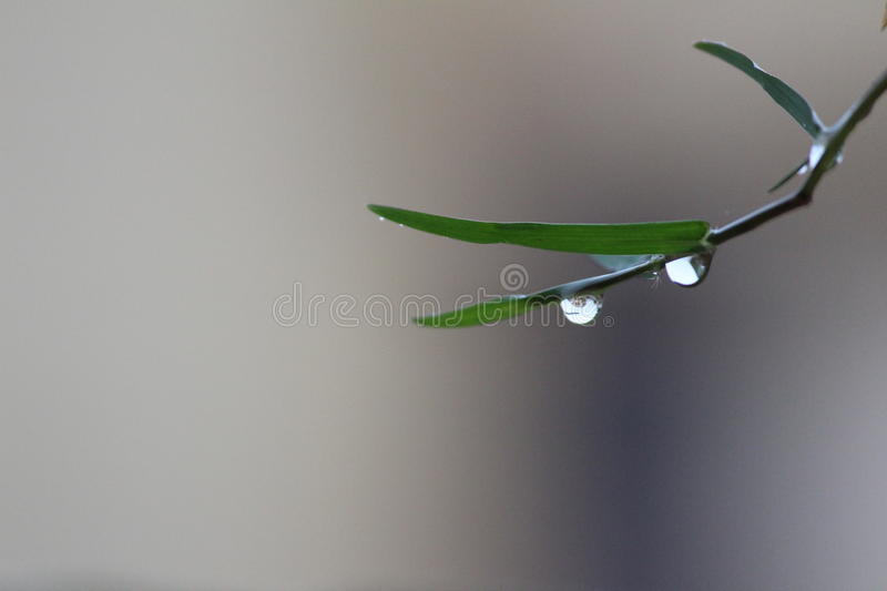 Drops Of Life..! royalty free stock images