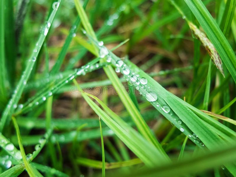 Drops of morning dew on the green grass.  stock photos