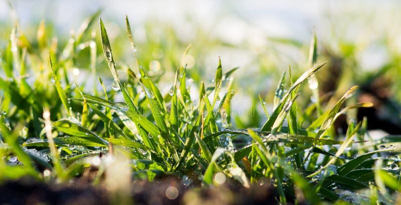 Drops of rain on the grass sparkle against the sun_. Drops of rain on the grass sparkle against the sun stock photos