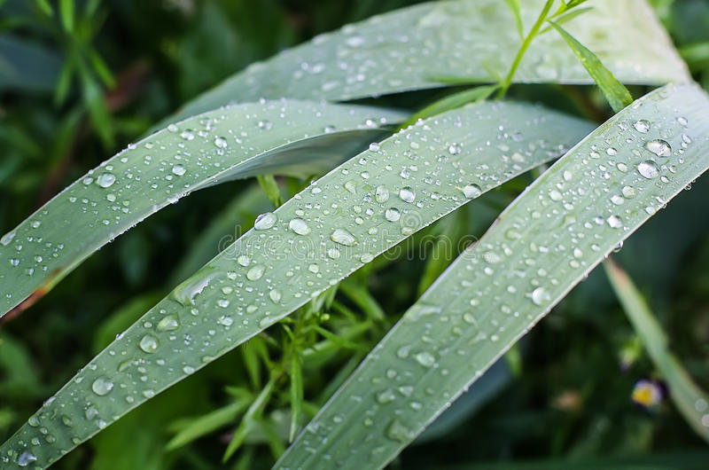 Drops of rain on green leaves stock images