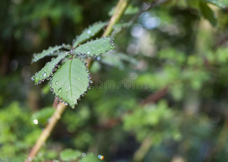 Droplets stock image