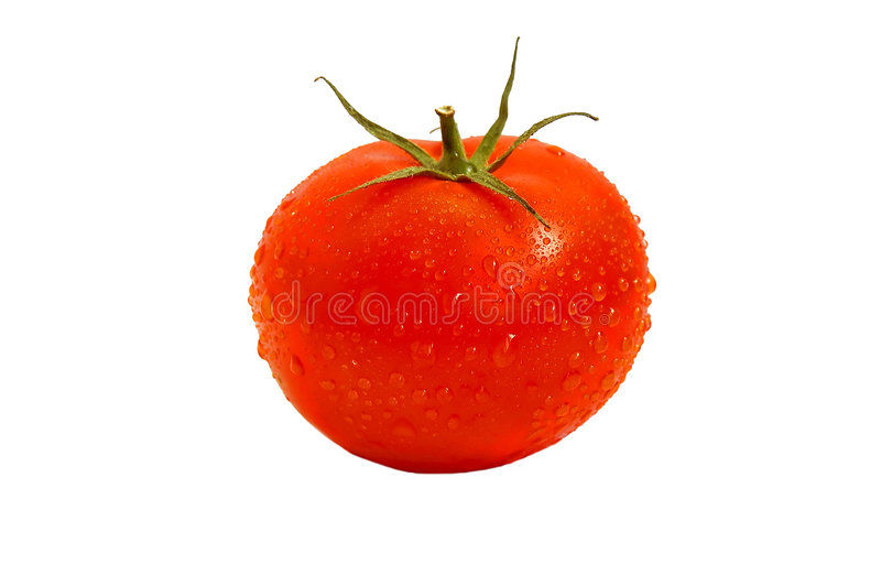 Drops in tomatoes. stock photography