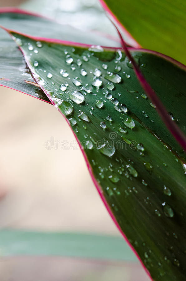 Drops stock images