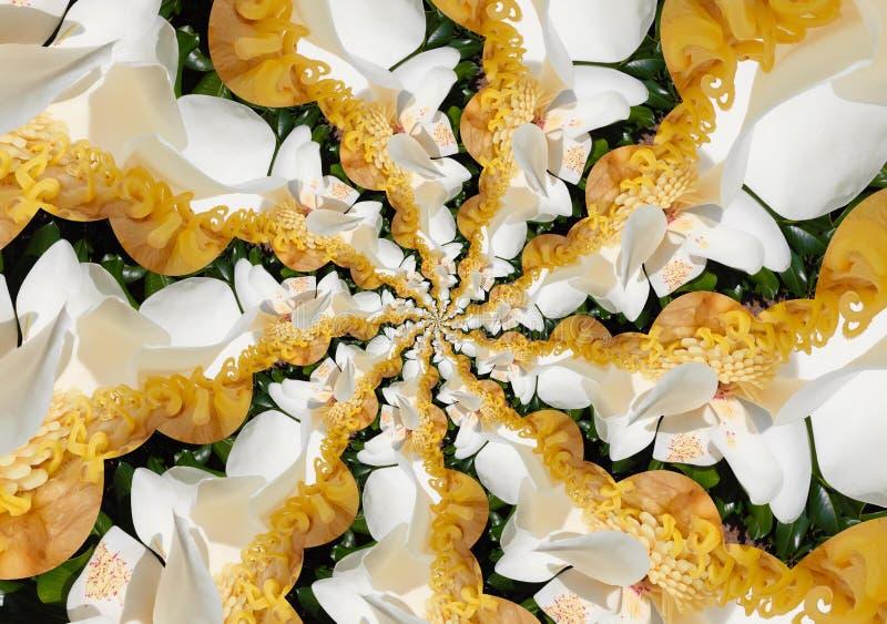 Droste del efecto del primer de la flor blanca de la magnolia grandiflora con sus pistolas libre illustration