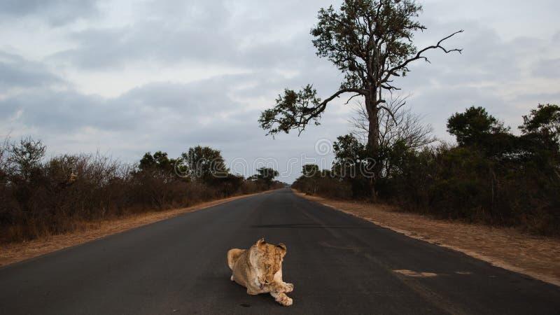 Drottning av Krugeren royaltyfria foton