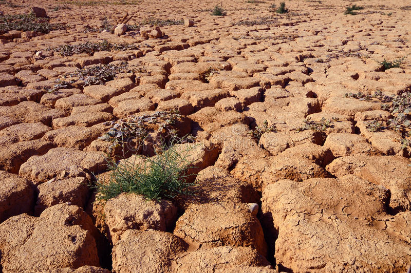 Download Drought stock photo. Image of environmental, landscape - 29520772