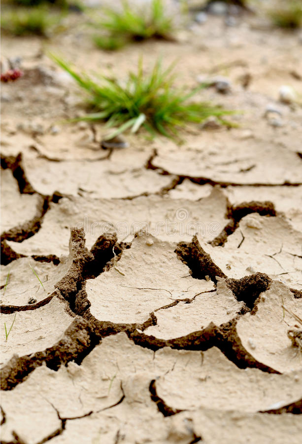 Drought. Concept image for climate change. Low angle image of drought lake bed following prolonged dry period. Cracked mud and struggling plants show the effects royalty free stock photos
