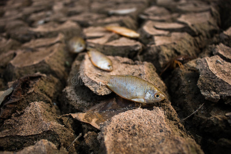 Drought, Dry ground on dead fish. stock images