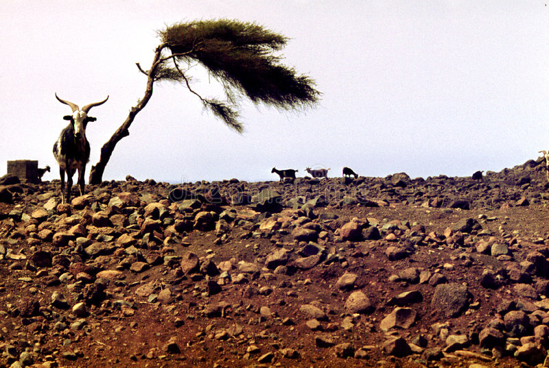 Drought and dryness