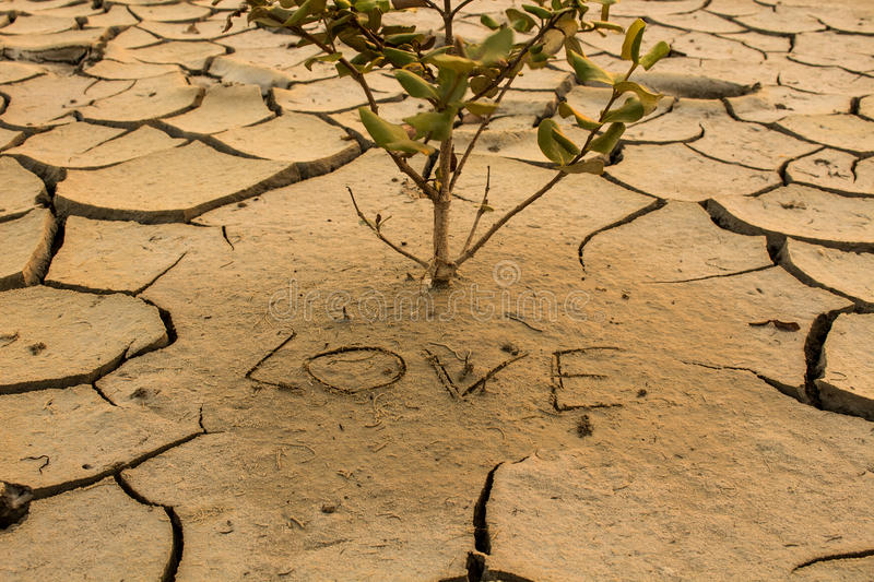 Drought, global warming, environment changes suddenly. stock photos