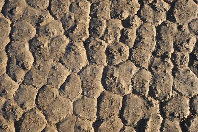 Download Drought ground stock photo. Image of crack, park, death - 27538712