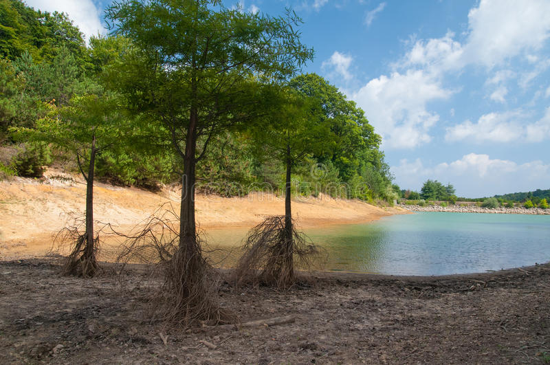 Drought. Horizontal photo showing dead roots of trees near water, because of water shortage and severe drought caused by global warming stock photos