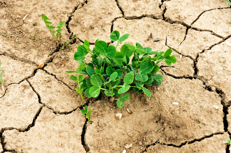 Download Drought plant stock photo. Image of earth, geology, drought - 24389432