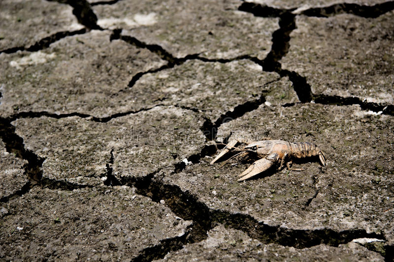 Drought - river dried up with died crab- Global warming royalty free stock image