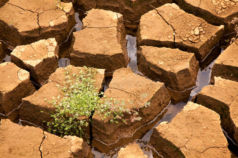 Drought soil with vegetation. In brazilian dam stock photography