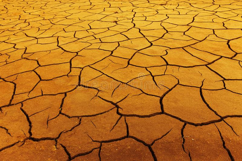 Drought in summer royalty free stock photos
