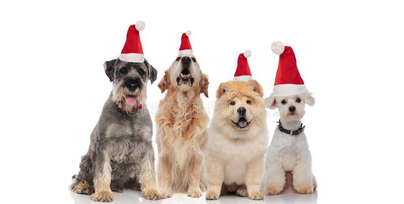 Drużyna cztery ślicznego Santa psa różny trakenów dyszeć zdjęcie stock