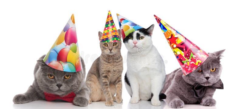Drużyna cztery partyjnego kota z kolorowymi kapeluszami zdjęcia royalty free