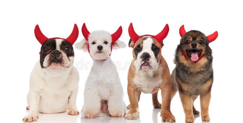 Drużyna jest ubranym Halloween kostiumy cztery ślicznego psa zdjęcia royalty free