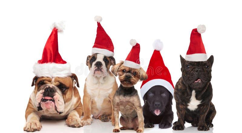 Drużyna pięć ślicznych Santa psów różni trakeny zdjęcia stock