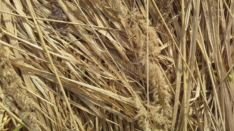 Dru grass, hay, straw, pring, warm, springtime, color royalty free stock photography