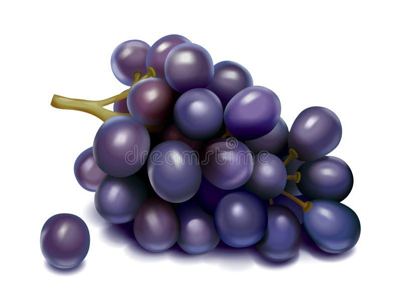 druif vector illustratie