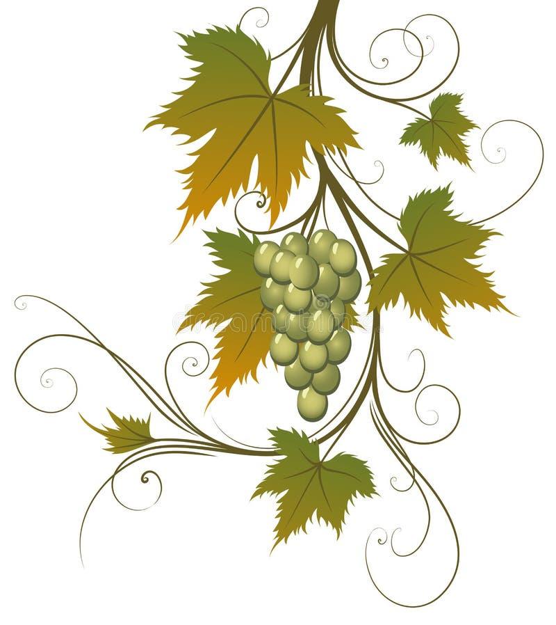 Druif en bladeren royalty-vrije illustratie