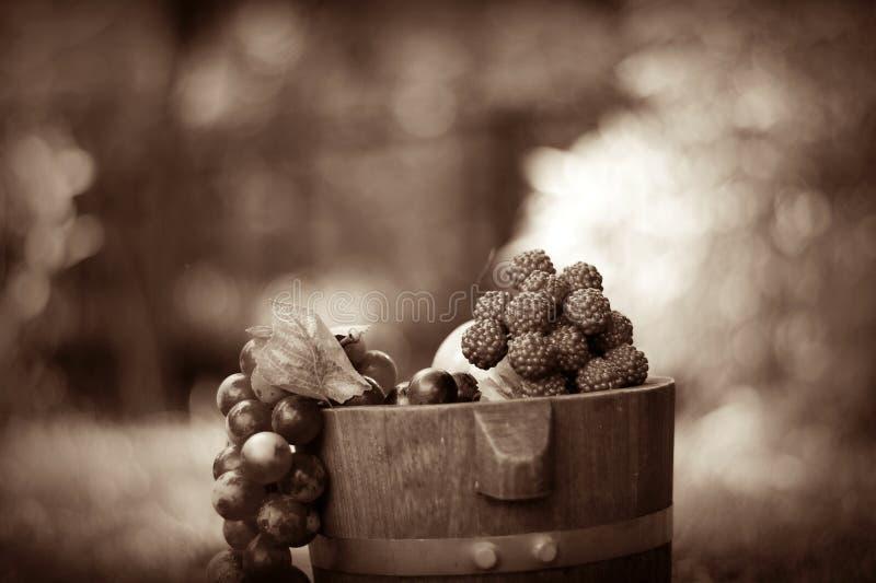 Druif en eiken vaten Sepia 1 royalty-vrije stock foto's