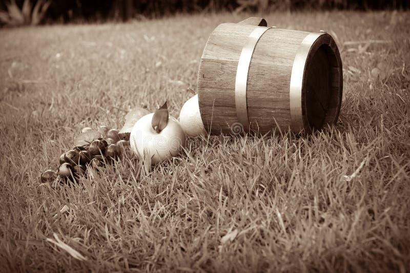 Druif en eiken vaten Sepia stock fotografie