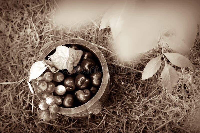 Druif en eiken vaten Sepia 2 stock foto