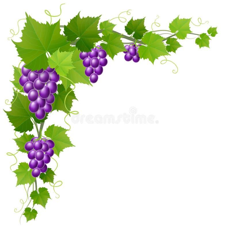 Druif met de decoratie van de bladhoek voor de herfstoogst vector illustratie