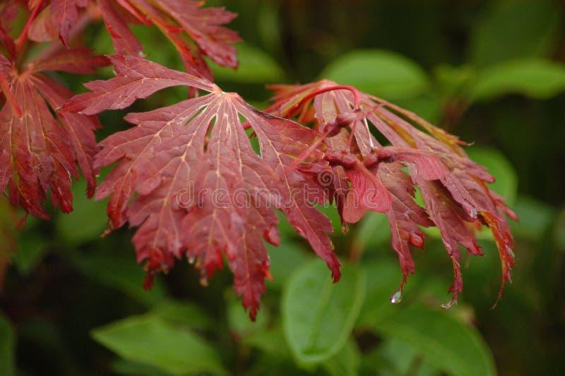 Druipende bladeren stock afbeelding