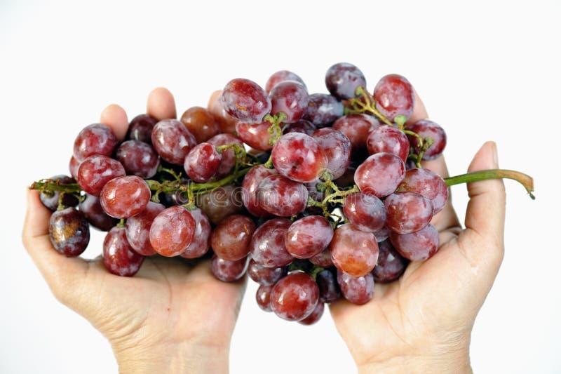 Druiven 1 royalty-vrije stock fotografie