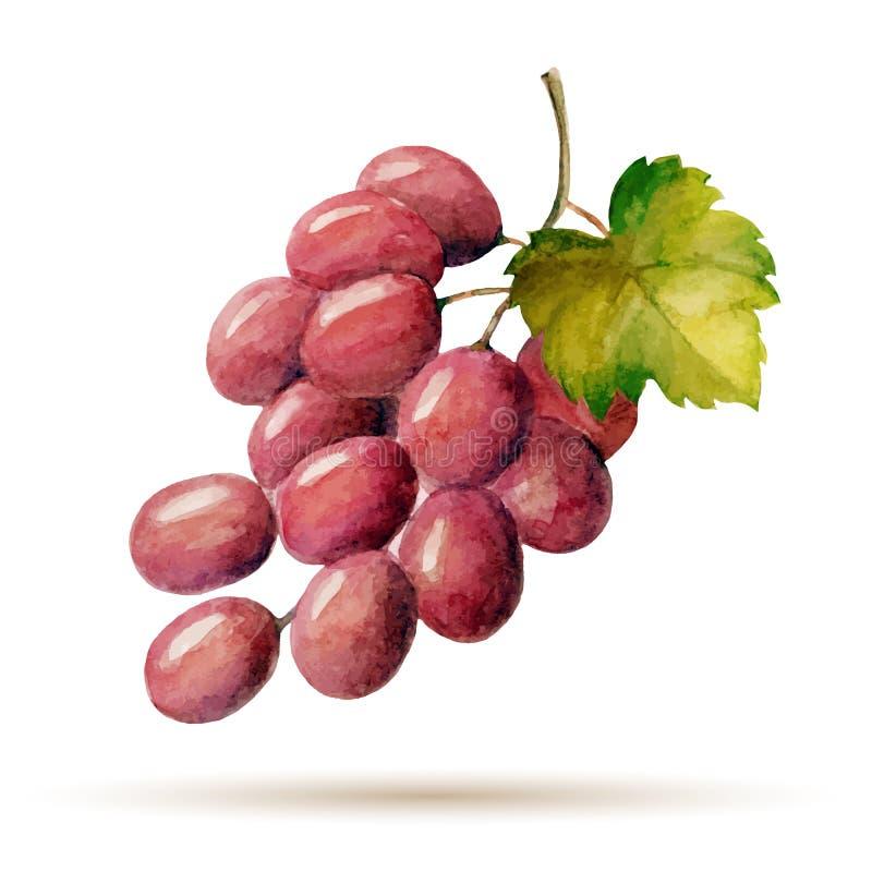 Druiven vector illustratie