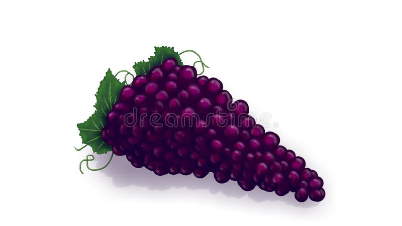 Druiven royalty-vrije illustratie